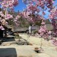 福島県南会津 大内宿 4月末でも山桜が咲いていた