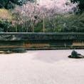 数年前の桜の時期🌸