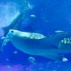 #美ら海水族館 #ジンベイザメ