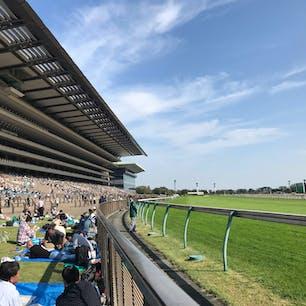 東京競馬場 芝生の一番前を場所とりして観ると迫力が違います ピクニック気分で 早く行きたいな…