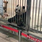 和歌山アドベンチャーワールド パンダラブツアーでバックヤードを見学 餌やり体験ができます パンダ可愛い♡