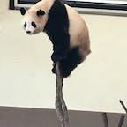 和歌山アドベンチャーワールド 可愛いパンダや動物がたくさん パンダ好きには時間が足りません…!