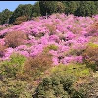 西明寺   #サント船長の写真 #京都