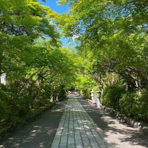 石山寺の山門を通った後の紅葉のトンネル。 紅葉は見事なんだろうとは思いますが、春の青もみじのトンネルも見事でした。