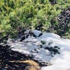 2021.5.15 みくりが池は雪で覆われていましたが、 多分池の周りだと思われる所で 雷鳥さん発見❗️