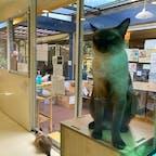 チコのバーンメオ(猫の家) 店内でお買い物をすると高貴なシャムねこさん達と戯れる事が出来る。