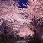 北海道北斗市にある大野川沿い桜並木のライトアップ。ソメイヨシノが300m続く桜のトンネルが見事です。夜は歩行者天国になるので、のんびりお散歩を楽しむことも。川のせせらぎの音が聞こえてくる清々しいスポットです。#北海道 #北斗 #大野川沿い桜並木 #北斗桜回廊