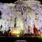 樹齢300年という道内最大級のしだれ桜が見事な法亀寺(ほうきじ)。町の人たちもこの桜をとても誇りに思っています。圧倒的なスケールの昼も見事ですが、妖艶な光に包まれる夜の雰囲気も素敵です。#北海道 #北斗 #法亀寺 #北斗桜回廊