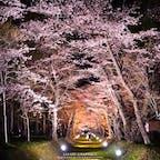 800m続く桜のトンネルが美しい道内有数の桜の名所、松前藩戸切地(へきりち)陣屋跡。歴史と桜が融合した風情あるスポットで、国指定文化財に指定されています。ソメイヨシノをはじめ、エゾヤマザクラや八重桜などの競演を楽しむことができます!#北海道 #北斗 #松前藩戸切地陣屋跡 #北斗桜回廊