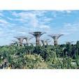 シンガポール シンガポール植物園 ガーデンズバイザベイ