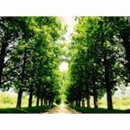 メタセコイア並木 新緑から深緑へ