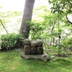 長谷寺 苔も美しい。