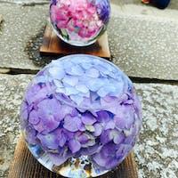奈良の般若寺、ガラスボールに色とりどりの紫陽花を入れた花手水。 紫陽花と初夏コスモスが見ごろです!