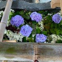 京都花手水 上賀茂神社  #サント船長の写真 #京都 #花と水の京都