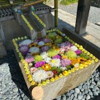 京都花手水 金戒光明寺  #サント船長の写真 #京都 #花と水の京都