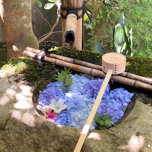 〰️Kyoto🇯🇵〰️ #柳谷観音#楊谷寺#花手水#花と水の京都