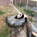 アドベンチャーワールド パンダが唯一たくさんいる 癒やしの場所