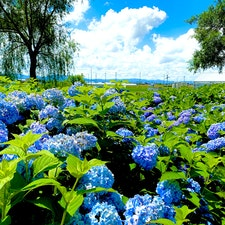 滋賀県もりやま芦刈園