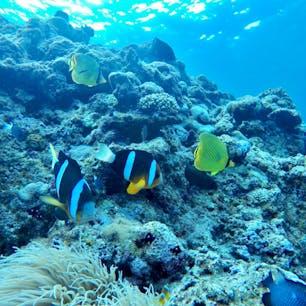 海の中 ダイビング 沖縄 青の洞窟