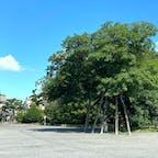 御所 清水谷家の椋の木 左端に蛤御門が判りますね。  京都御苑の外郭九門の一つ。本来の正式名称は「新在家御門」。 詳しくはハッシュ記号の蛤御門へ飛んで下さい。  #サント船長の写真 #京都御所 #京都 #蛤御門