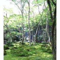 京都 祇王寺 嵐山を自転車で散策。 苔がたくさんある祇王寺良かった!