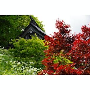 山寺仁王門(山形市 , 山形県)  山形市にある山寺。 正式名称は、立石寺(りっしゃくじ)」といい、松尾芭蕉が「閑さや 岩にしみ入る 蝉の声」という句を詠んだ場所とも言われています。  この写真は、仁王門の前で撮影したもので、梅雨の前5〜6月にかけて色づくノムラモミジを撮影したもの。 紅葉といえば秋を想像しますが、木々がめぶく春にポツンと色づく赤い紅葉というのも、山寺らしい風景なのだそう。  梅雨の雨が続くこんな季節だからこそ、いいなぁと感じられる一枚でした。
