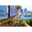 シドニーはタロンガ動物園。オペラハウスを臨むことができる景観が魅力です。