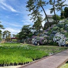2021.6 花菖蒲と紫陽花が見事な庭園。
