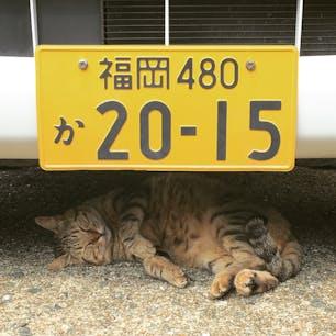 福岡県の相島、通称は猫島。猫様から寄ってきてくれる人懐こい子たちでした。