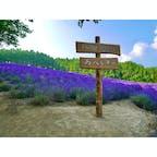 北海道 ファーム富田 4連休に念願のラベンダー畑見てきました!