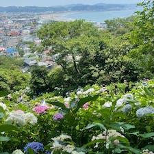 少し前ですが、  長谷寺の紫陽花 紫陽花と海は絶景✨