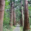 立派な杉並木が続く羽黒山の参道。木陰になってるので夏でもわりと歩きやすいけど、でも2400段も登り降りするとさすがに汗だくでした。