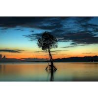 沖縄県 石垣島 〜名蔵湾〜 一本のヒルギが生えていて [朝、夕、夜]といい 写真が撮れる場所です