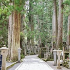〰️Wakayama🇯🇵〰️ #和歌山#高野山#奥の院