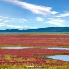 北海道に秋を告げるこの時期の風物詩「サンゴ草(アッケシ草)」。道東のいくつかの町で見ることができますが、網走市能取湖のほとりにある卯原内(うばらない)サンゴ草群落地が日本一の面積を誇ります。 塩分の多い湿地帯に広がる真っ赤な絨毯は、一度は見てみたい圧巻の景観です。#北海道 #網走 #能取湖 #卯原内サンゴ草群落地