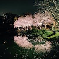 2021.3.29 縮景園 夜桜