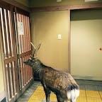 女子トイレを覗くオス鹿🦌 変態さん。