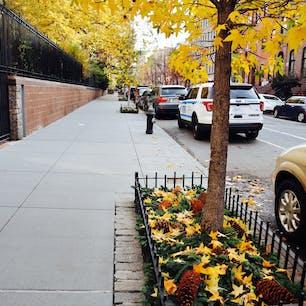 New York / Brooklyn イチョウの木と大きな松ぼっくりが秋らしさを感じさせる、ブルックリンの住宅街。ニューヨークの秋はすごく短いです。 #newyork #brooklyn