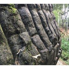 史跡 益田の岩船   益田岩船は、奈良県橿原市白橿町にある石造物。奈良県指定史跡に指定されている。 亀石や酒船石などと並ぶ飛鳥の石造物の1つで、その中でも最大のものである。  #サント船長の写真 #巨石