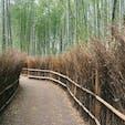 2018.04.01 🏕:竹林の小径(京都府嵐山) 📷:OLYMPUS PEN Lite E-PL7