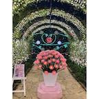 あしかがフラワーパーク 「光の花の庭」へお出かけ。 とてもキレイなイルミネーションで 見応えがありました。 ただ、寒かった🍃防寒対策必須です😅 #栃木県足利市#あしかがフラワーパーク#光の花の庭