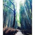 #京都 #嵐山 #竹林の小径 #わたしの街