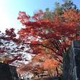 岩手公園の石垣と紅葉🍁