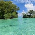 🇵🇼Palau 海の透明度が高くてエメラルドグリーン! マングローブ貝のパスタは美味しいけど、見た目がギョッとする。