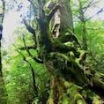 🇯🇵鹿児島 屋久島 屋久島の魅力は苔だと思う。 雨が降った後の屋久島がキラキラしててより好き。