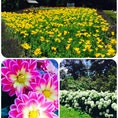 札幌 百合が原公園。トラベルライター、月夜野さんオススメの公園。 園内広く、花々を愛でながらのんびり散策♡