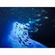🇺🇸 #Saipan #Grotto ダイビング経験なくても楽しめます!ちょっとハードだけどきれい🐠