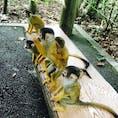 餌に群がる猿たち♡ 石垣島・1801