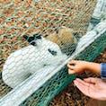 動物や植物と触れ合えるテーマパークで子供も喜んでいました。開放的なレストランで食べるランチも美味🍴  八幡平にいくことがあればぜひ立ち寄るべきスポットです。  #岩手 #八幡平 #サラダファーム
