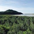 西表島 浦内川の展望台。 展望台から見えるあたり一面のマングローブ林は圧巻。  2018年5月  #西表島 #マングローブ #沖縄 #離島 #ジャングル
